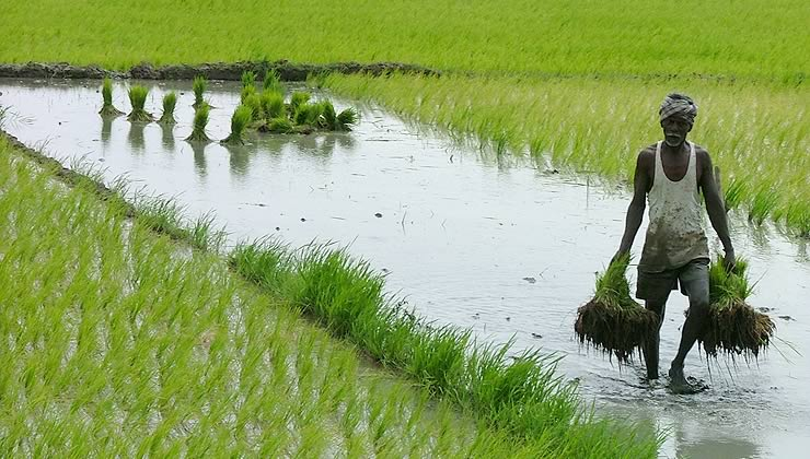 How old is Indian agriculture?