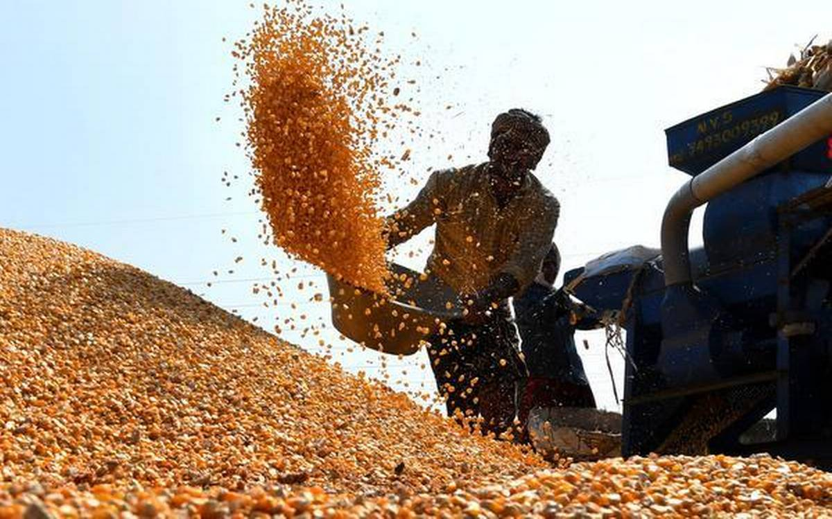 Seeds and Knowledge: How the Draft Seeds Bill degrades both